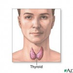 Thyroid gland improved functioning through proper nutrition